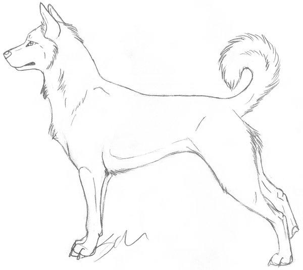 Dessin de chien - Image de chien dessin ...